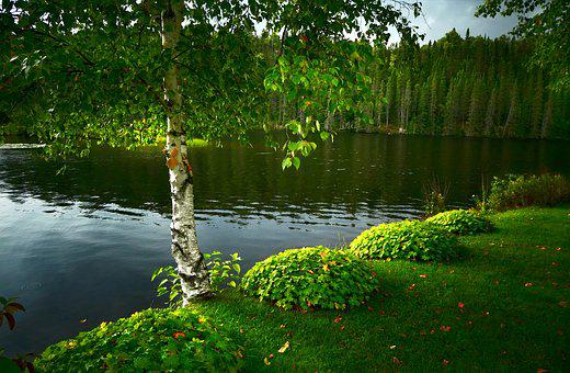 Birch, Landscape, Tree, Lake, Water, Foliage, Wood