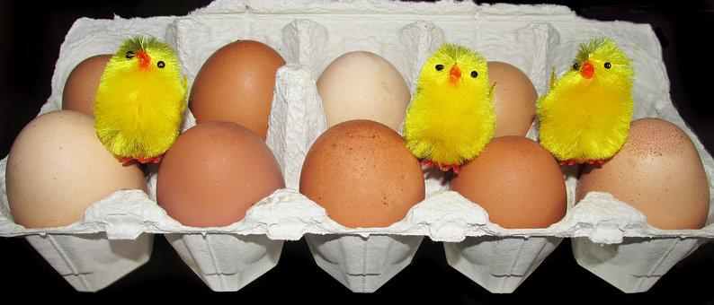 Eggs, Free Range, Farm, Chickens, Poultry