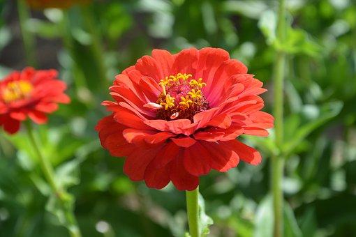 Flower, Flowers, Petals, Nature, Garden, Decorative