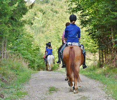 Horses, Reiter, Ride, Group, Equestrian, Rural, Animals