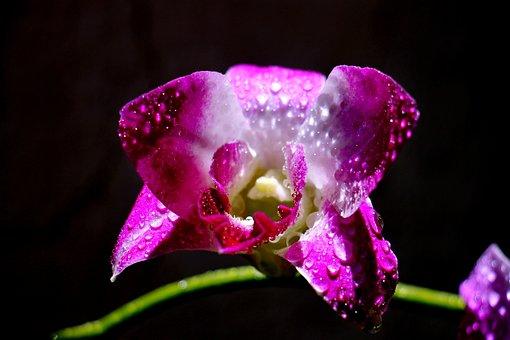 Flower, Feng, Rolling