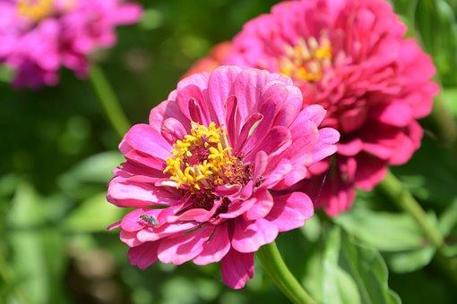 Flower, Flowers, Petals, Nature, Bouquet, Plants