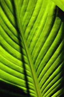 Foliage, Green, Worth, Leaf Veins, Bright, Leaves