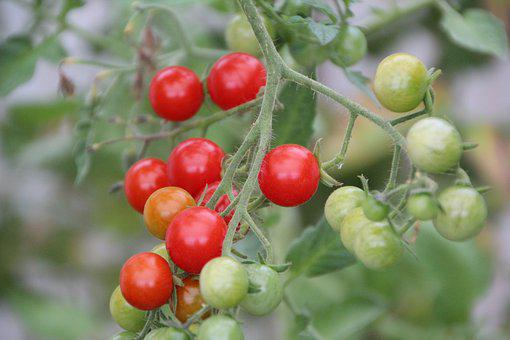 Tomatoes, Cherry Tomatoes, Tomato Red, Fruit