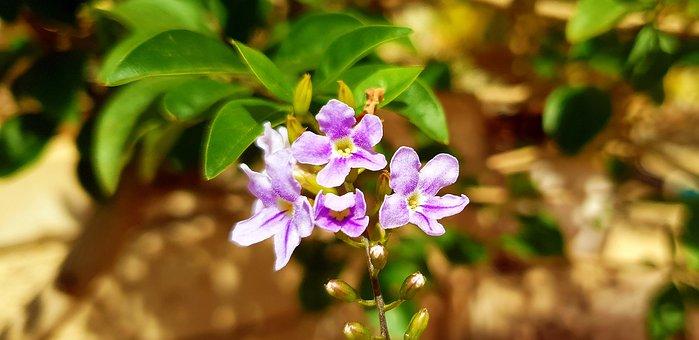 Flower, Flora, Nature, Petal, Garden, Floral, Beautiful