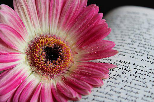 Gerbera, Flower, Nature, Water Drop, Macro, Book