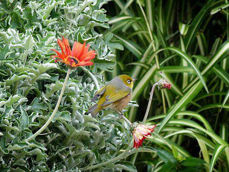 Bird, New Zealand, Nature, Animal World, Plumage