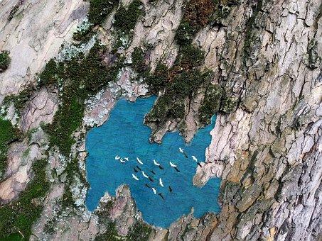 Lake, Platanus, Lake Platanus, Tree, Bark, Plane, Moss