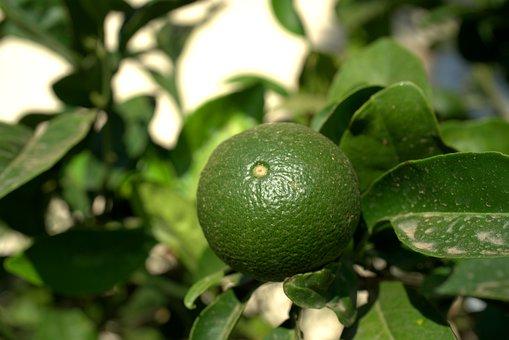 Lemon, Lime, Fruit, Vitamins, Fresh, Refreshment, Sour