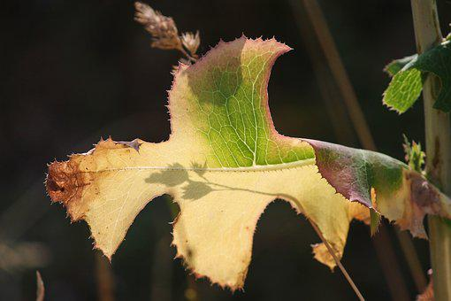 Leaf, Drought, Structure, Shadow, Light On, Silhuette