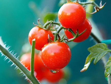 Tomato, Red, Vegetables, Food, Fresh, Healthy, Ripe