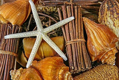 Sea, Snails, Casing, Starfish, Still Life, Animal