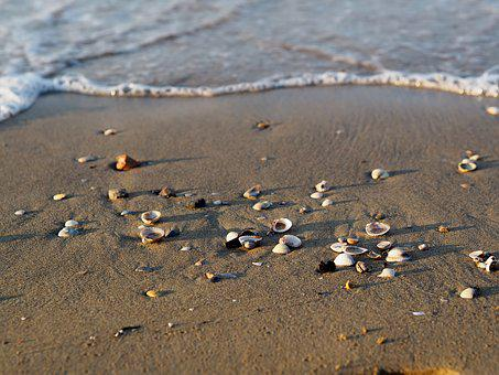Beach, Sea, Mussels, Collect, Water, Vacations, Summer