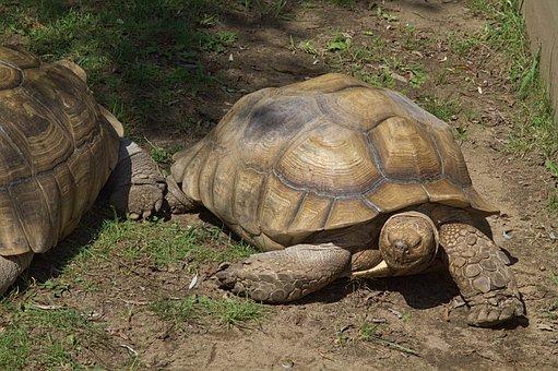 Tortoise, Turtle, Two, Zoo, Animal, Nature, Feeding