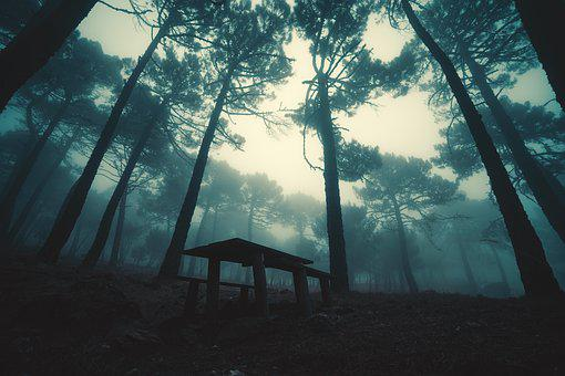 Fog, Forest, Trees, Landscape, Mystic, Mysterious