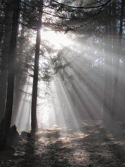 Light, Rays, Sun, Nature, Landscape, Sky, Trees, Forest