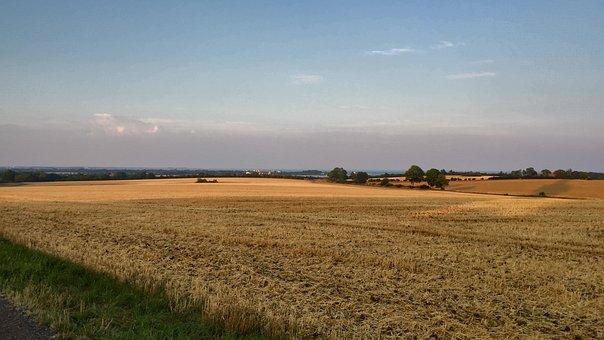 Field, Wheat Field, Harvest