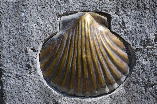 Stone, Shell, Quartz, Iron Ore, Minerals, Stonemason