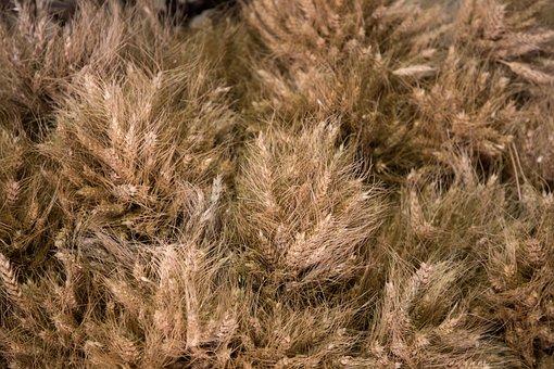 Wheat, Labor, Agriculture, Farm, Countryside, Food