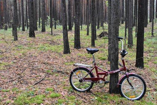 Forest, Bike, Stroll, Pine, Landscape, Nature, Trees