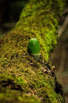 Green, Acorn, Oak, Nature, Tree, Leaves, Fruit, Fall