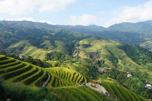 Terraced Fields, Longji, Dragon's Back, Terrace