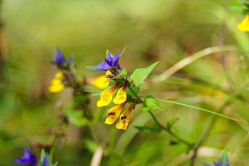 Flowers, Nature, Flora, Spring, Macro, Field, Plants