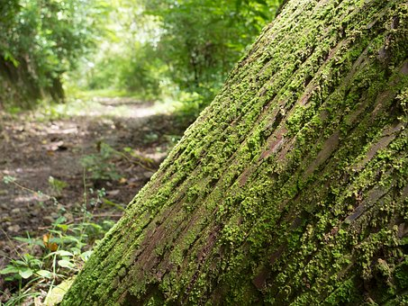 Hiking, Woods, Moss, Natural, Forest, Wood
