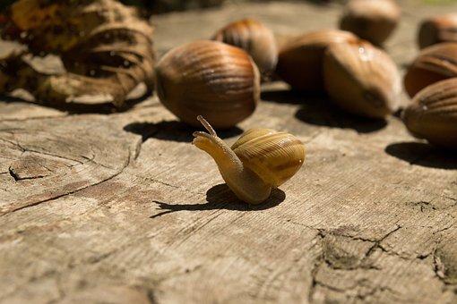 Snail, Wood, Nuts, Nature, Shell, Bark, Portrait