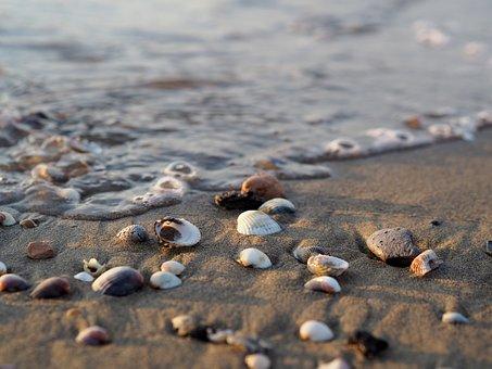 Sea, Water, Beach, Salt Water, Drift Wood, Wave, Ocean