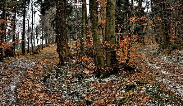 Beeches, Part, Winter, Autumn, Way, Crossroads