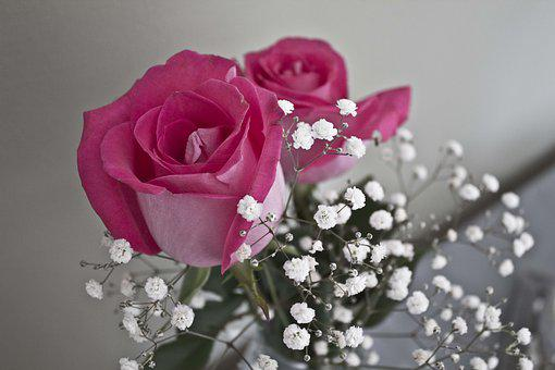 Rose, Pink, Pinkroses, Bloom, Nature, Flowers, Romance
