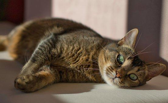 Cat, Relaxed, Mysterious, Pet, Mieze, Kitten, Rest