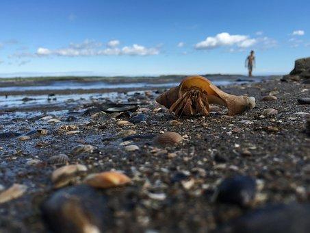 Sea, Water, Blue, Clouds, Hermit Crab, Hermit, Crab