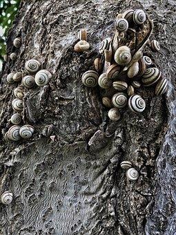 Snails, Shelled, Texture, Tree, Shell