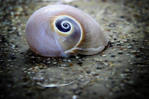 Snail, Shell, Mollusk, Nature, Close Up, Macro, Water