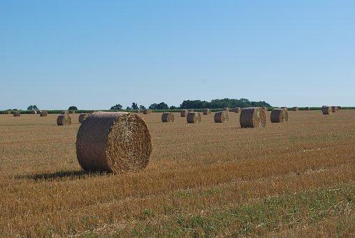Straw, Bundles, Harvest, Agriculture, Landscape, Fields