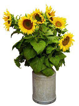 Nature, Flower, Sunflower, Blossom, Bloom, Summer, Sun