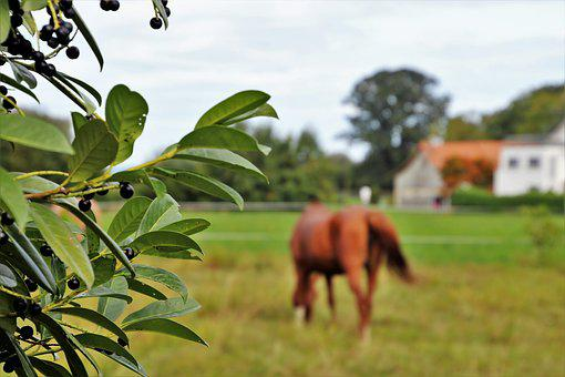 Pasture Land, The Horse, Animal, Landscape, Grazing