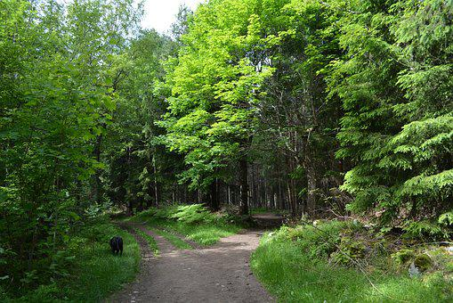 Forest, Nature, Landscape, Trees, Green, Path, The Tree