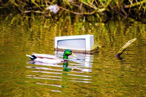 Duck, Water, Tv, Swimming, Trash, Nature