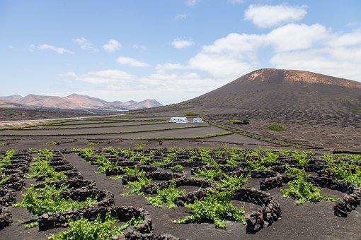Lanzarote, Vineyard, Landscape, Viticulture, Vines