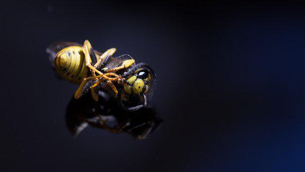Background, Insect, Wasp, Dead, Die Of Thirst, Macro