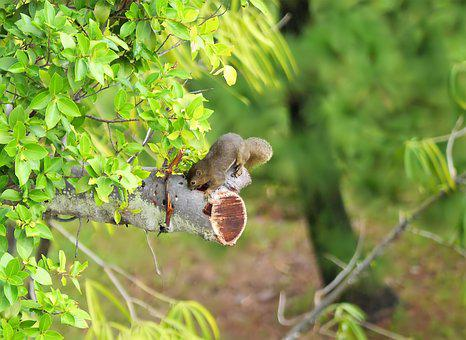 Outdoor, Wild, Wildlife, Tree, Branch, Forest, Small
