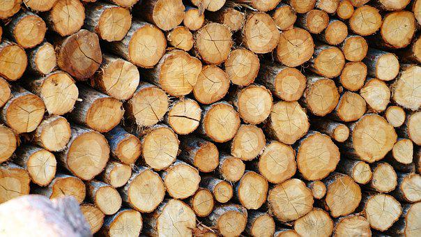 Wood, Also Clearly Sense, Firewood, Annual Zone, Fuel