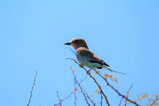 Africa, Etosha, Namibia, Safari, Bird, Close Up