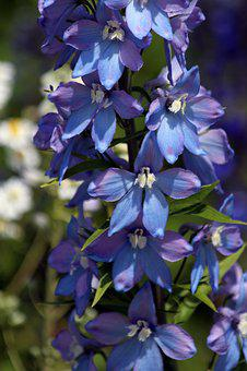 Bell, Blue Flower, Flower, Delphinium, Blue, Purple