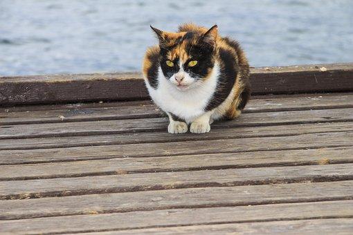 Tricolor, Cat, Animals, Kitten, Darling, Pet, Cats