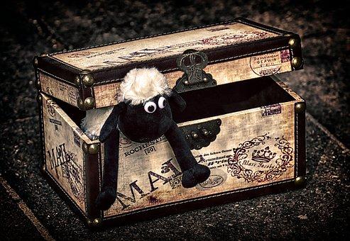 Sheep, Chest, Box, Funny, Animal, Soft Toy