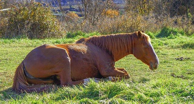 Horse, Equine, Equestrian, Horse Riding, Mane, Mammal